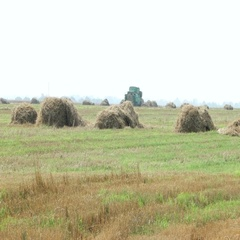 Natural autumn rural background - the grain combine reaps a crop from a field. Stock Footage
