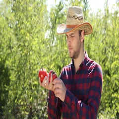 Happy Handsome Farmer Man Examine Red Tomato Show Ok Sign Gesture Looking Camera Stock Footage