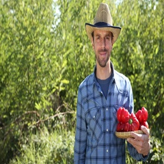 Happy Confident Farmer Man Hold Red Pepper from Organic Garden Showing Ok Sign Stock Footage