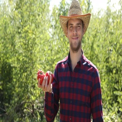 Positive Farmer Person Hold Delicious Red Tomato Showing Thumb Up Sign to Camera Stock Footage