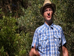 European Gardener Man Talking Traditional Olive Trees Plantation Farming Concept Stock Footage