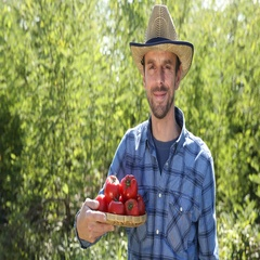 Confident Good Looking Farmer Man Hold Fresh Red Tomato Posing Smiling to Camera Stock Footage