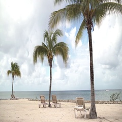 Beachside Palm Trees Sway in the Breeze With Lounge Chairs on the Sand Stock Footage
