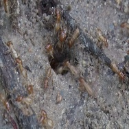 Termite colony walk down in hole in the ground in the rainforest Stock Footage