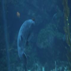 Spotted Fish in Public Aquarium Stock Footage