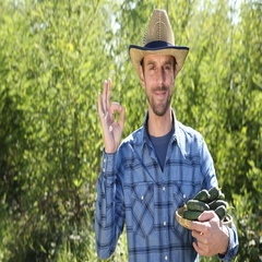 Smiling Farmer Man Quality Check Hold Fresh Cucumbers Showing Ok Sign to Camera Stock Footage