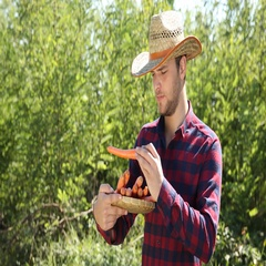 Positive Farmer Man Holding Carrots Show Camera Thumb Up Sign Checking Quality Stock Footage