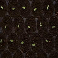 Small farm salad vegetable planting at night with house lighting Stock Footage