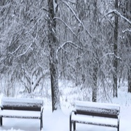 Snowy forest in the park Stock Footage
