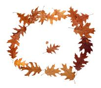 Frame of autumn dried oak leaves Stock Photos