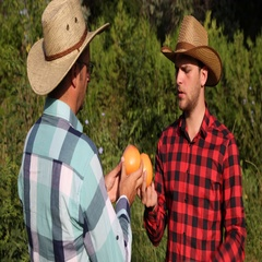 Farmer Men Talking About Organic Grapefruit Farm Collaboration Offer in Orchard Stock Footage