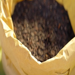 Black rice in a paper food bag on the table. Closeup and out of focus shot. Stock Footage