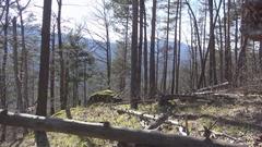 Windbreak fallen trees Stock Footage