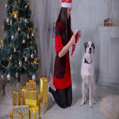 Girl regaling and playing with husky dog near christmas tree Stock Footage