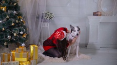 Girl regaling and playing with dog near christmas tree Stock Footage