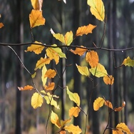 The forest in autumn Stock Footage