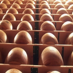 Parmesan wheels cheese forms seasoning at a Parmigiano Reggiano factory Stock Footage