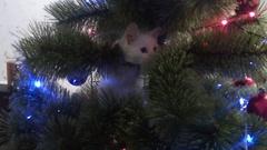 White cat climbed the tree Stock Footage