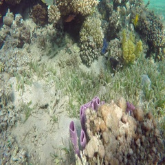 Purple tube sponges on a tropical coral reef, 4k Stock Footage