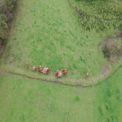 Organic living - Organic cattle farm seen from above Stock Footage