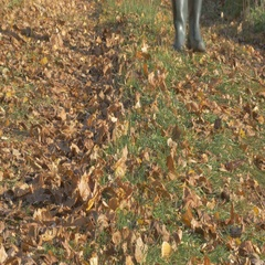 One man, walking along the road in the village at autumn day. Shallow focus Stock Footage