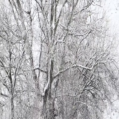 Snow covered trees in the wind , winter storm Stock Footage
