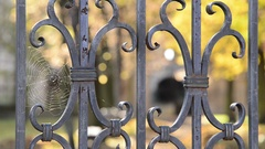 Spider web on the old  wrought gate in the autumn park. Stock Footage