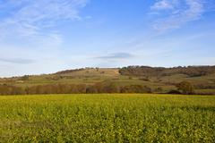 Mustard crop with scenery Stock Photos