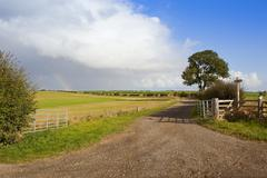 Ash tree and bridleway Stock Photos