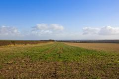 Straw stubble field in autumn Stock Photos