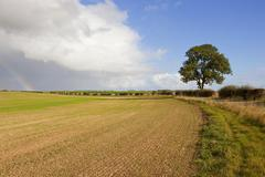 Ash tree with hedgerows, fields and rainbow Stock Photos