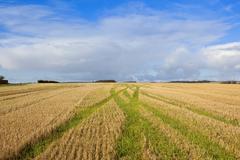 Straw stubble patterns on autumn farmland Stock Photos
