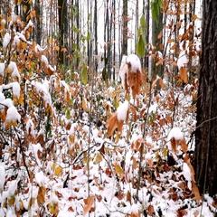Viennese/wienerwald wood in autumn with snow Stock Footage