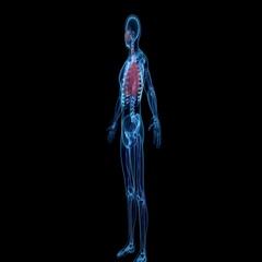 Respiratory System 4k Stock Footage