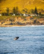 South Africa Whale Watching  Stock Photos