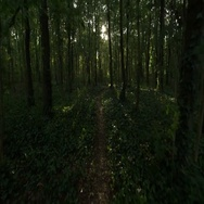 Gliding through a golden green forest towards the sunglight Stock Footage