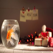 Beautiful golden fish swimming in aquarium, gifts around, celebrating New Year Stock Footage