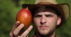 Confident Young Farmer Man Inspecting and Showing An Organic Mango in Orchard Stock Footage