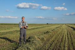 Farmer in clover field examine crop Stock Photos