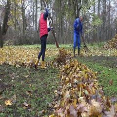 People rake leaves in autumnal park. Team work. 4K Stock Footage