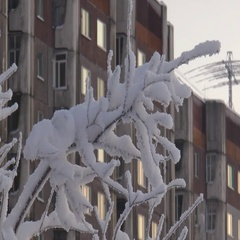 Snow-covered branches of trees on a background of residential buildings. Stock Footage