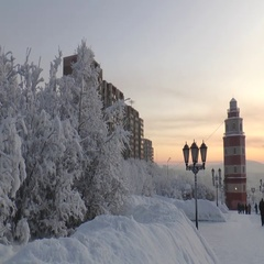 Snowy Avenue with trees, the tower and houses in the distance. Stock Footage