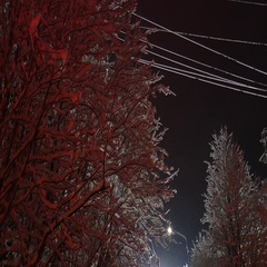 Snow covered trees and wires in the electric light on a background of dark sky. Stock Footage