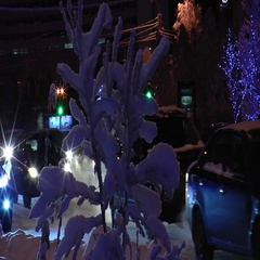 Snow-covered bush and passing vehicles in the pre-Christmas night  city. Stock Footage