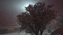 Snow-covered bush and passing cars with the electric light on a winter night. Stock Footage
