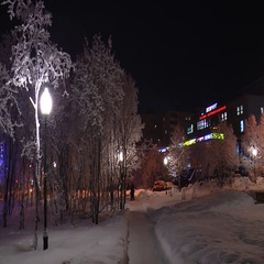 Night winter cityscape - street and snow-covered trees. Stock Footage