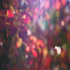 Autumn leaves 4K source footage Stock Footage