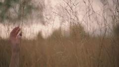 Gentle girl hand touching the golden high grass. Natural European beauty Stock Footage