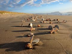 Many seashells on a beautiful beach Stock Photos