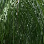 Tropical heavy rain in asian rainforest Stock Footage